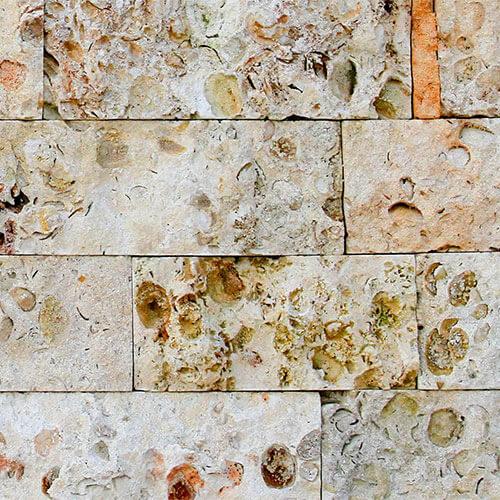 Shellstone de 10 cm